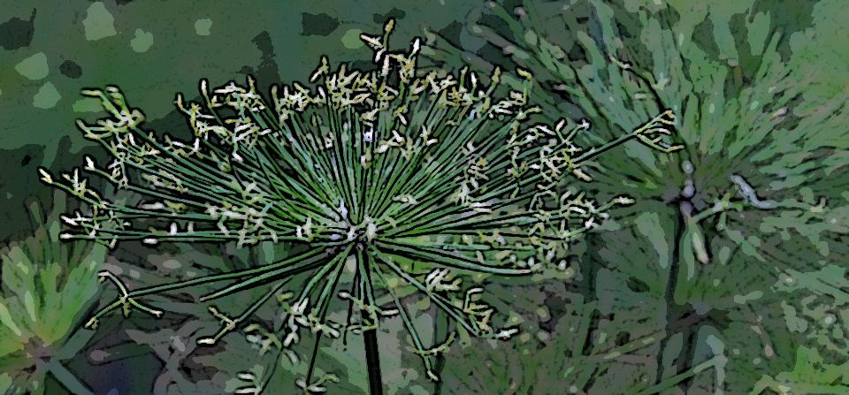 artifice végétale  jackyb